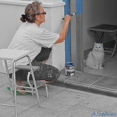Gato aprendiendo como se debe pintar una puerta :)