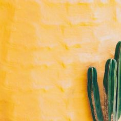 yellow background with green cacti, wedding decor inspiration, cactus, yellow and green color motif