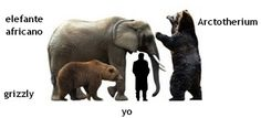 comparing the size of an African elephant and grizzly bear to the extinct prehistoric arctotherium 'short faced' bear