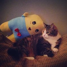Sometimes cats and funassyi are friends
