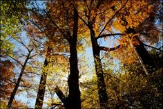 Pinnacle Mountain State Park-Little Rock, Arkansas   Beautiful fall colors