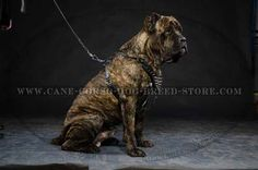 Multifunctional #Leather #Dog #Harness With Spikes For #Cane #Corso $69.90