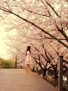 Cherry Blossom, Busan, Korea  #KoreanLiving #KoreanLife #LifeInKorea