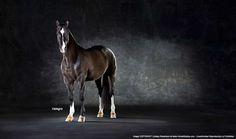 horse photography - Valero by Horse Studios