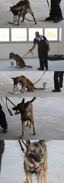 The ATF conducted training for and testing on area police dogs on their ability to recognize a variety of odors like explosives and narcotics March 27-29.