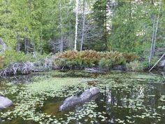 Photo des Laurentides - Paysage des Laurentides - Région de Saint-Hyppolite - Québec - Canada