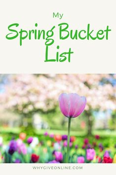 My Spring Bucket List! My Spring Bucket List. Are you ready for Spring? Check Out my list and get excited for Spring! Easter Activities, Spring Activities, Family Activities, Alcohol Is A Drug, Welcome Spring, Spring Art, Spring Recipes, Spring Break, Organic Gardening