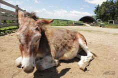 We visited the Donkey Sanctuary in Guelph and photographed this old man named Earl Grey!