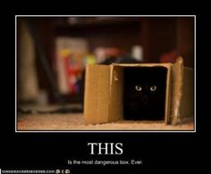 """In the universe there is a world and in the world there is a forest, and in that forest a cave with a box """"the most dangerous box ever"""" and in that dark, dark box, a dangerous creature no on has ever lived to tell what it is Creeps & Lurks, Until today...  """"CAAAAAAAAAT!!!!!!"""""""