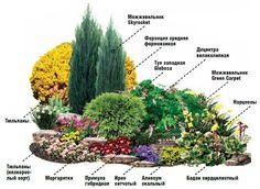 клумба непрерывного цветения из многолетников схемы: 17 тыс изображений найдено в Яндекс.Картинках