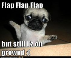 awwww!!! this is absolutely adorable!! i want a pug :(