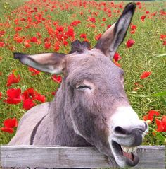 #SHOUTOUT 4 @BhamDonkeys The Donkey Sanctuary Assisted Therapy centres need your support http://www.thedonkeysanctuary.org.uk/therapy/birmingham …
