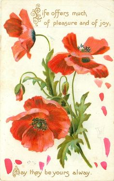 LIFE OFFERS MUCH OF PLEASURE AND OF JOY, MAY THEY BE YOURS ALWAYS red poppies