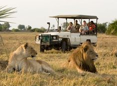 Featured image for Making the Most of Your African Safari