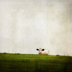 Cow of Silence | Flickr - Photo Sharing!