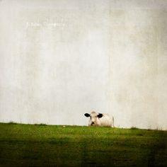Cow of Silence by jamie heiden, via Flickr