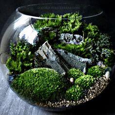 Live moss terrariums, terrarium kits & gift sets, and miniature garden supplies by Doodle Bird Terrariums! Featuring Star Wars diorama terrariums,