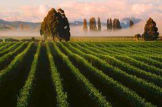 Marlborough Region, South Island New Zealand