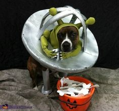 When all of you dress up for Halloween, shouldn't your animals get in on the fun? Welcome To The Crazy World of Animal Halloween Costumes Alien Dog Costume, Animal Halloween Costumes, Diy Dog Costumes, Halloween Costume Contest, Homemade Costumes, Dog Halloween, Costume Ideas, Halloween Crafts, Creative Costumes