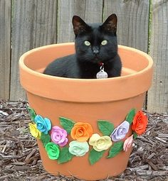 Handmade clay roses.  I'd gone to get some potting soil and when I returned, my 18 lb cat was in the pot!  I ran for my camera!  :)