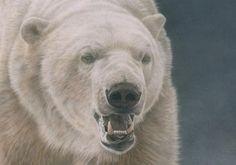 Pencil Drawings of Polar Bears   View original acrylic painting.