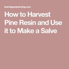 How to Harvest Pine Resin and Use it to Make a Salve