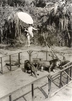 The 18-year-old Bertha Maddock on the tightrope over an open cage with wild lions, 1929