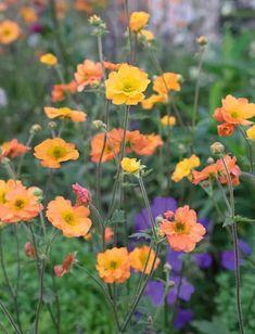 You do things… Gravel Garden, Garden Plants, Orange Flowers, Colorful Flowers, Plant Design, Garden Design, Melbourne Trip, Hardy Perennials, Chelsea Flower Show