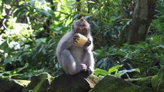 Sangeh Monkey Forest - Bali