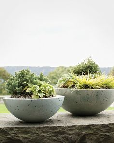 These rounded pots owe their smooth, elegant forms to a kitchen workhorse: the metal mixing bowl, in two sizes. Masonry stain added to the basic hypertufa formula imparts a cool blue hue. Mixed groupings of dwarf plants -- conifers, ground covers, and hostas -- fill the hemispheres.