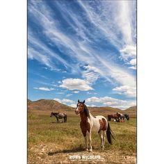 Standing tall  . . . #wildhorsepc #utahphotographer #utahisrad #utahisrad #wildhorses #wildlifeaddicts @experienceutah @visitutah #visitutah #canon #splendid_animals #excellent_nature #equestrian #animal_elite #allunique_pro #nature_sultans #instagood #instanature #igrefined #horsestagram #horsesofinstagram #HorseForever #horsepower #equestriansofinstagram #equestrianstyle #skyporn #cloudporn