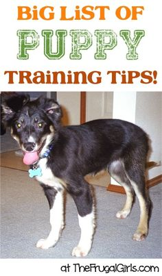BIG List of Puppy Training Tips and Tricks! ~ at TheFrugalGirls.com ~ everything you'll need to know for training your dog! #puppies #dogs #thefrugalgirls