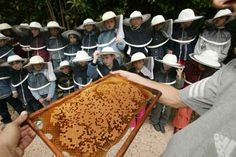 Near Hyères in the Var, a nursery school class discovers beekeeping at the Pradet educational apiary. Honey Bee Pictures, Bee Keeping, Nursery School, Visible, Honey Bees, Action, Food, Kids, Bees