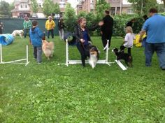 Agility class. Health for them and for you.