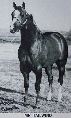 Mr Tailwind Quarter Horse  Color: ch  AQHA# 0426631  Blaze/R.Hind Sock/L.Hind Stocking/Flaxen Mane & Tail AQHA Show H-12/P-0 high % Foundation Breeder: Mr & Mrs William Moorman, Fort Pierre, SD. Owner: Mr & Mrs Bill G Moomey, Waukesha, WI.  World & Reserve World Champion Sire, Superior Halter & Performance Sire AQHA Champion Sire, ROM Halter & Performance Sire
