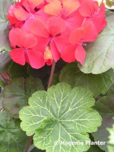 Wantirna 6168 copy Plant Leaves, Planters, Lily, Pictures, Plant, Window Boxes, Pot Holders, Flower Planters, Pots