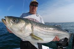 """Angling Participles: A VISIT FROM """"ST.RIPED BASS"""", (with my apologies ..."""