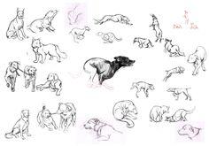 dog-sketches.jpg (1600×1123)