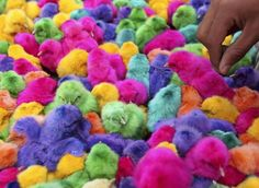 Colored chicks are sold during the run-up to Easter in downtown Amman, Jordan, on April (Reuters/Ali Jarekji) Pictures Of The Week, Weird Pictures, Animal Pictures, Srinagar, Baby Chickens, Easter Chickens, Palm Sunday, Easter Weekend, Holy Week