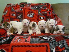 7 Georgia Bulldog cuties www.truegabulldogs.com