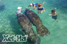 Swim with the Manatees in Mexico at Xel Ha