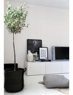 8x olijfbomen in huis