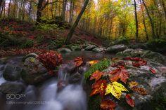 autumn by syounesi1214 #landscape #travel