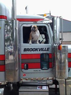 LIKE Progressive Truck Driving School today: http://www.facebook.com/cdltruck  #trucking #trucker #truck #truckdriver #truck #career #money #employment #education #Chicago