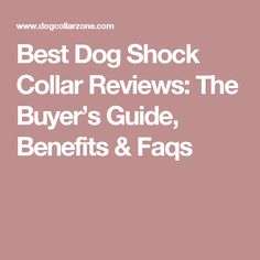 Best Dog Shock Collar Reviews: The Buyer's Guide, Benefits & Faqs