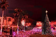 Arbol de navidad//Christmas Tree  Contraluz Producciones