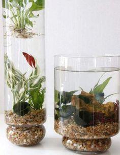 Indoor Aquaponics, Aquaponics Fish, Aquaponics System, Hydroponic Gardening, Organic Gardening, Container Gardening, Indoor Gardening, Vegetable Gardening, Hydroponics