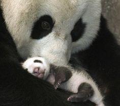 Rock-a-Bye Baby Panda