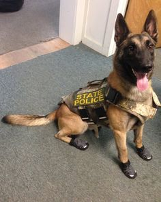 Check out K9 Buck of the Vermont State Police in his new vest and boots