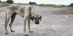 Maltrato animal: antesala de la violencia social